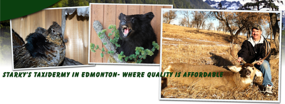Starky's Taxidermy in Edmonton - Where Quality is Affordable - Owner posing